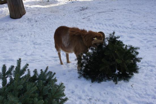 Stubenberg am See, Österreich: Доедаем остатки елки