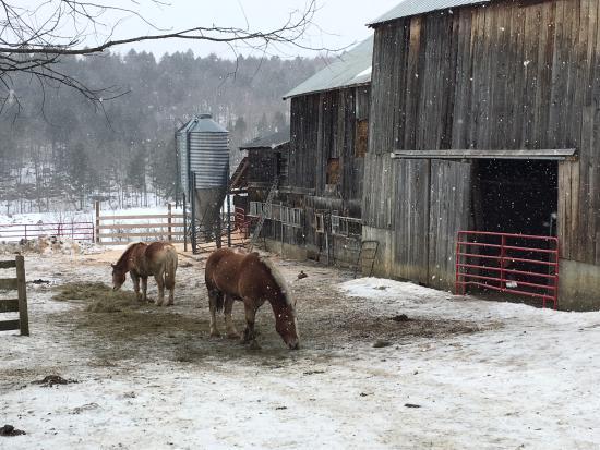 Sugarbush Farm Photo