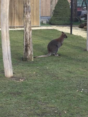 Rothenburg, سويسرا: Geburiparty im Zoo
