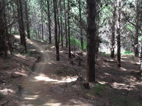 Woodhill, Nowa Zelandia: photo1.jpg