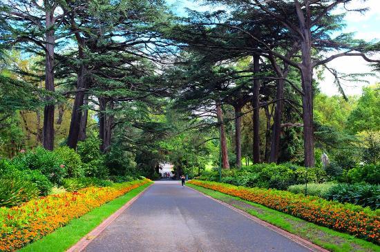 Taman Fitzroy