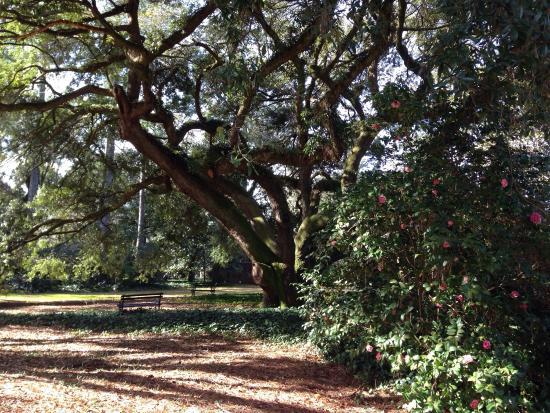 Aiken, SC: photo1.jpg