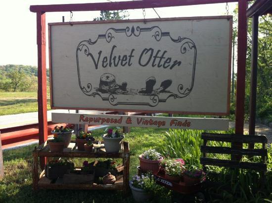 Velvet Otter