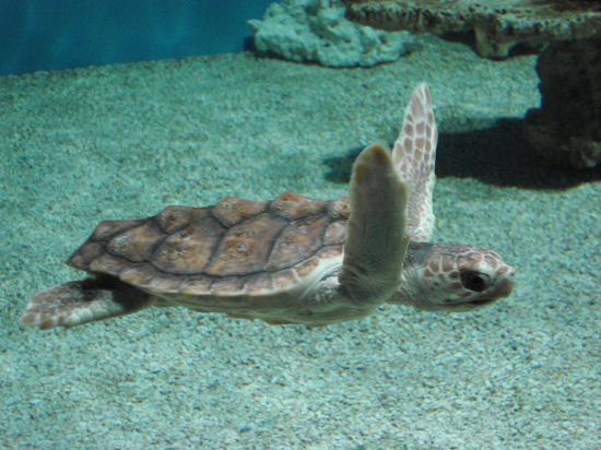 Monterey Bay Aquarium Admission