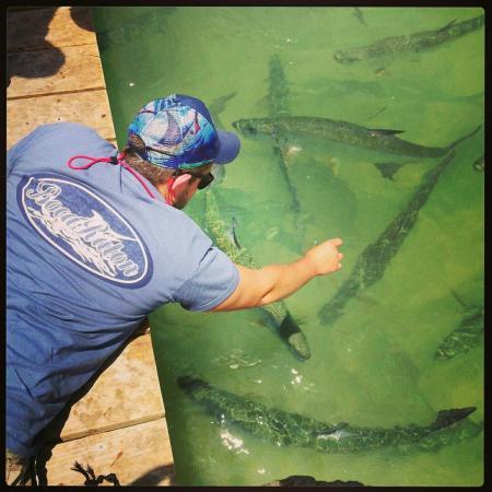 Lake Monroe, FL: Feeding the Tarpon