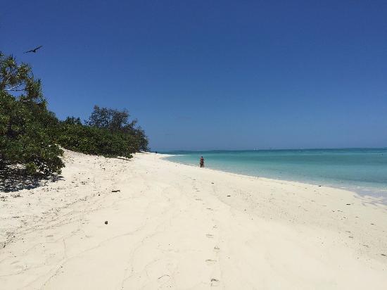 Beach - Heron Island Photo