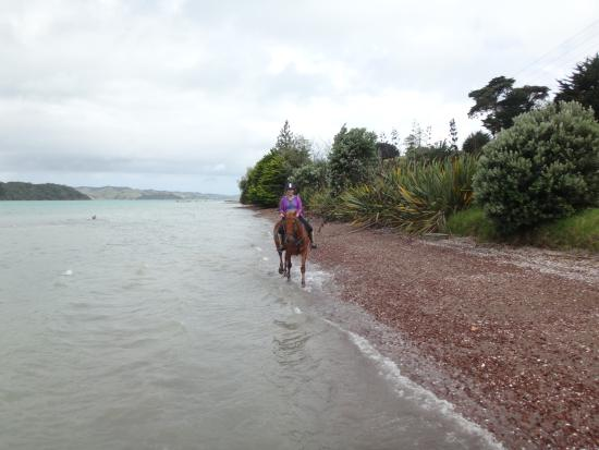 Νήσος Γουαϊχέκε Φωτογραφία