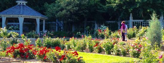 Chanhassen, MN : Rose garden at Minnesota Landscape Arboretum.
