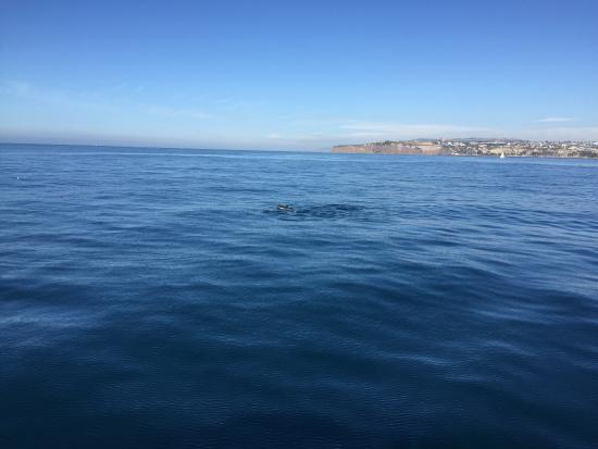 Dana Point, CA: Dana Wharf Whale Watching & Sportfishing