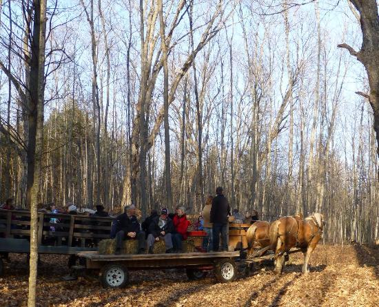 Madoc, Canada: Wagon Ride at Old Fashioned Christmas at O'Hara Mill