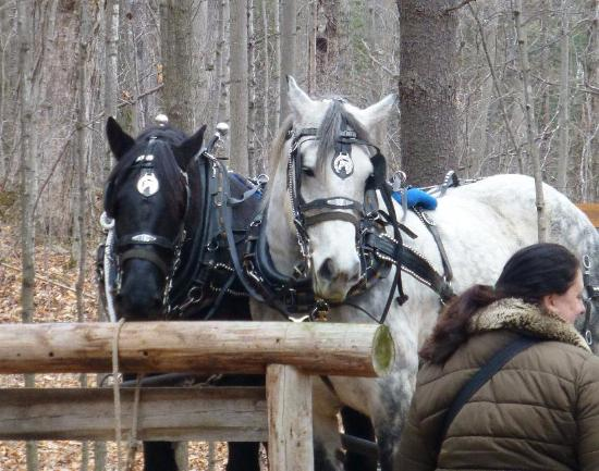 Madoc, Canadá: Team of horses