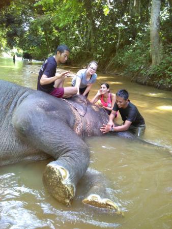 Pahang, Μαλαισία: photo3.jpg