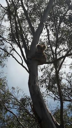 Paynesville, Australia: 20160131_135904_large.jpg