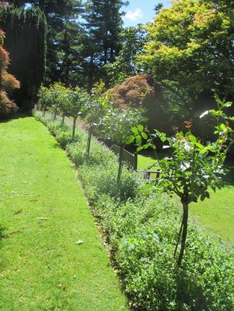 New Plymouth, Nueva Zelanda: hedge
