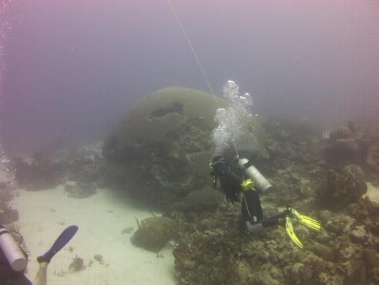 Mount Irvine, Tobago: Epic diving