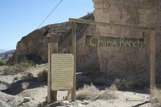 Panoramio - Photo of China Ranch Date FARM