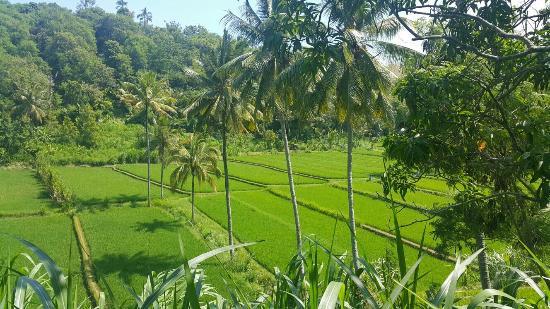 Mayong Village Tracking Experience: IMG-20160112-WA0002_large.jpg