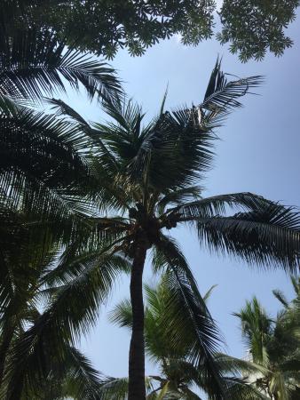 Avalon Beach Resort: photo2.jpg