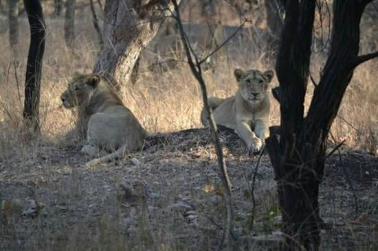 Devalia Safari Park: FB_IMG_1454240150791_large.jpg