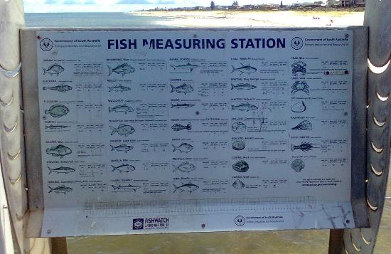 Grange, Австралия: Fish Measuring Station