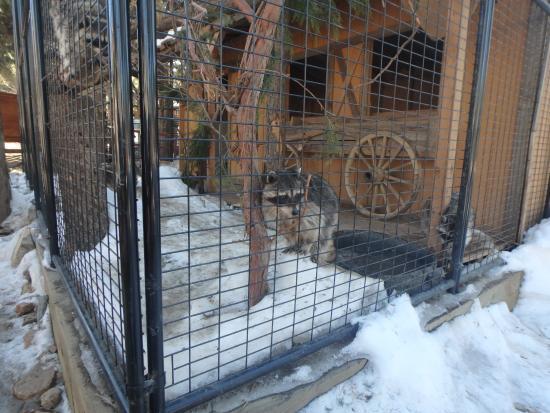 Big Bear Alpine Zoo at Moonridge Bild