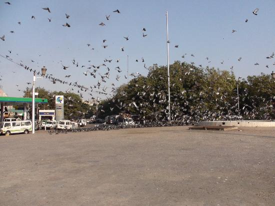 High Court Building : Jump on to the roundabout and host of pigeons scatter