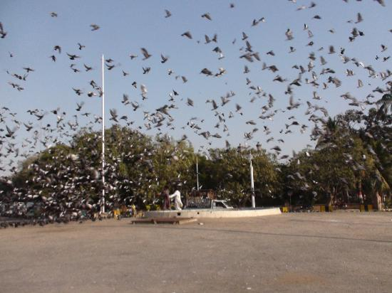 High Court Building : Pigeons fly like in a Bollywood Film