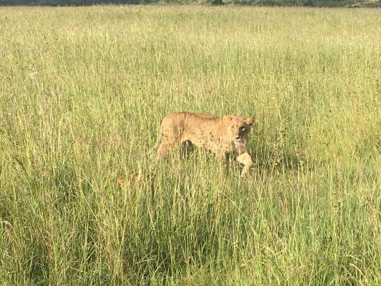 Nairobi National Park: photo0.jpg