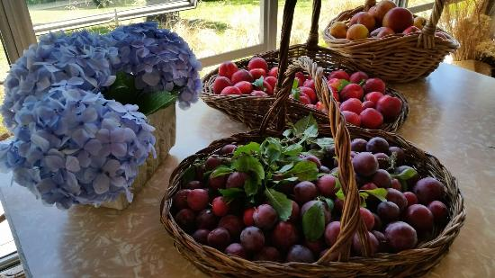 Oyster River Bed and Breakfast: Fruits from our orchard.