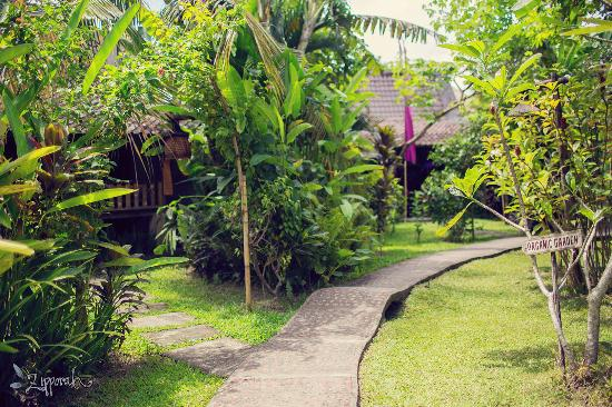 Swasti Eco Cottages: garden 1