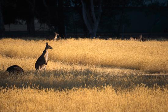 Kookaburra Motor Lodge Φωτογραφία