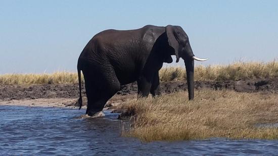 Gambar Chobe National Park