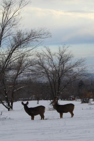 Grand Junction, CO: a pair of deer