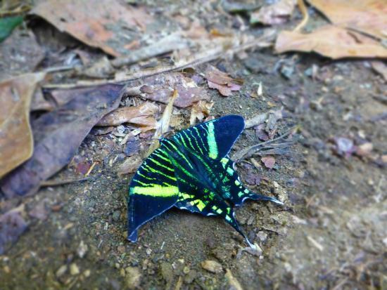 Carate, Kostaryka: photo6.jpg