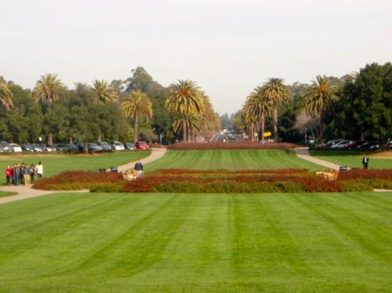 Zdjęcie Palo Alto