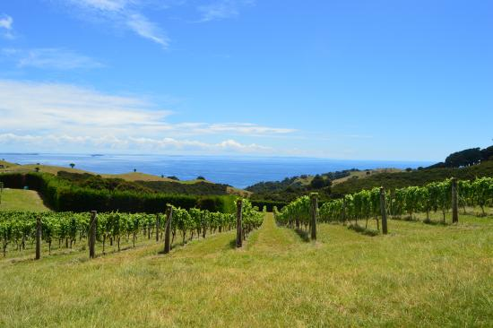 Wyspa Waiheke, Nowa Zelandia: Another stop - This one was after Man O' War. Just amazing