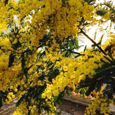 photo5 jpg photo de la tonnelle bormes les mimosas tripadvisor