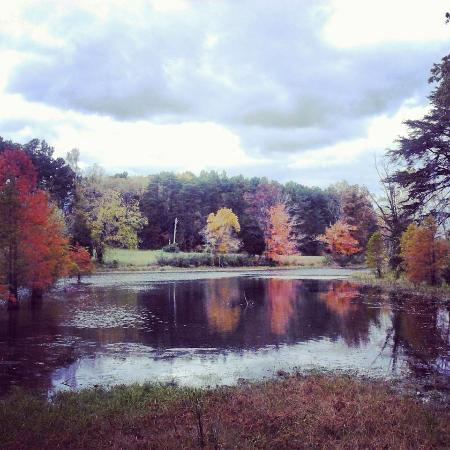 Clermont, KY: Fall at Bernheim