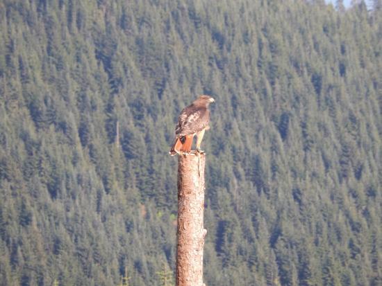 North Vancouver, Kanada: Apresentação de aves de rapina