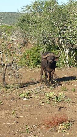 Pongola, جنوب أفريقيا: 20160127_170404_large.jpg