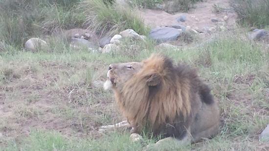 Pongola, جنوب أفريقيا: 20160127_184357_large.jpg