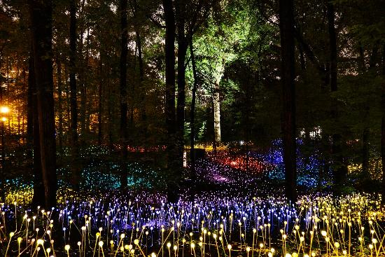 The Atlanta Botanical Gardens forest at night during their