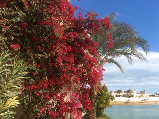 Hotel Sultan Bey Resort: Hote