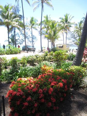 Palm Cove foto