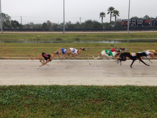 Daytona Beach Kennel Club Go Dogs