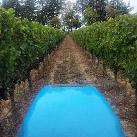Yamhill, ออริกอน: Mid Season In the Vineyard