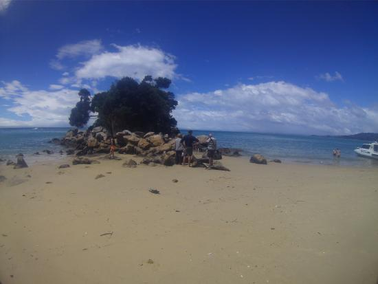 Sea Limousines: Abel tasman beach
