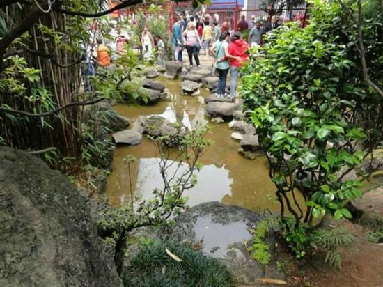 mini jardim oriental : mini jardim oriental:Jardim Oriental: FB_IMG_1454296306054_large.jpg