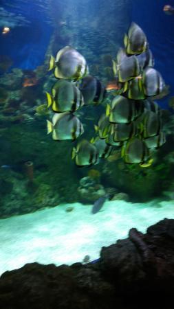 Fakieh Aquarium: Fishes