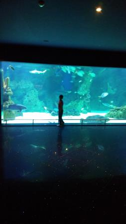 Fakieh Aquarium: Sharks